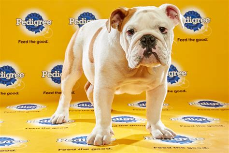 puppy bowl puppies how to draft the ultimate puppy bowl team wired