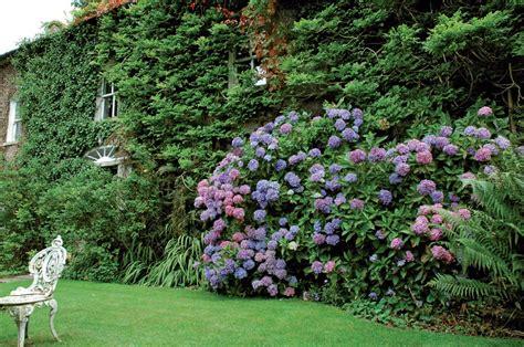 Siepi Per Giardini by Giardinaggio Siepi Protezione E Bellezza Per Il Giardino