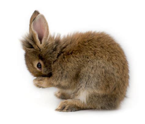 bagno coniglio si pu 242 fare il bagno ai conigli tutto ze