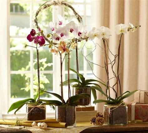 come coltivare in casa senza lade come coltivare le orchidee piante appartamento