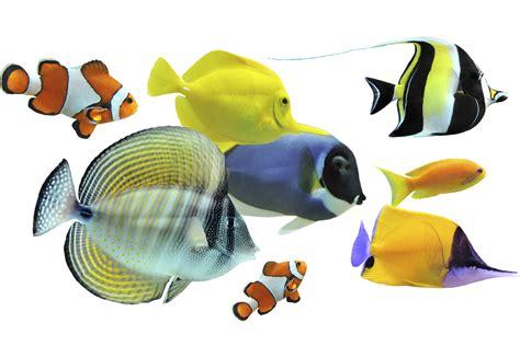 Poisson Exotique Pour Aquarium by Les Principales Esp 232 Ces De Poissons D Aquarium Doctissimo