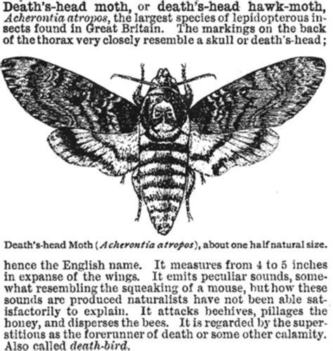 25 best ideas about meaning of moth on pinterest