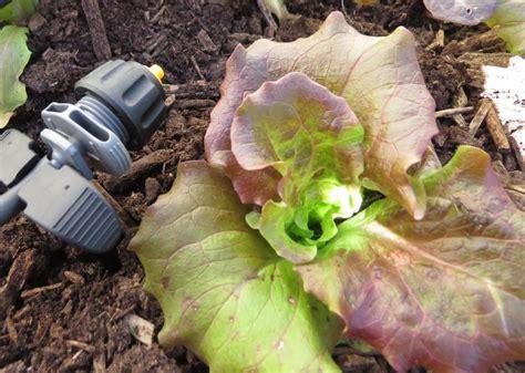 Legumes Qui Poussent Vite by Les 5 233 L 233 Ments Dont Vous Avez Besoin Pour D 233 Marrer Un