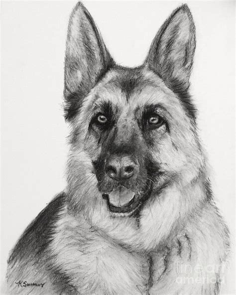 how to draw a german shepherd charcoal images sketches in charcoal drawing german shepherd in charcoal