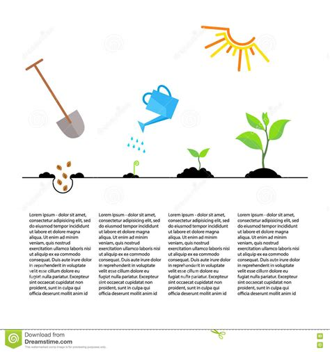 timeline infographic of planting tree process stock photo image 71654770