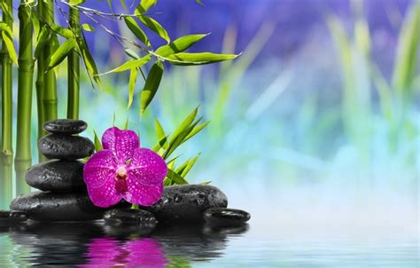 orchid blue water reflection flowers beautiful orchid wallpaper water bamboo bamboo orchid flower flower