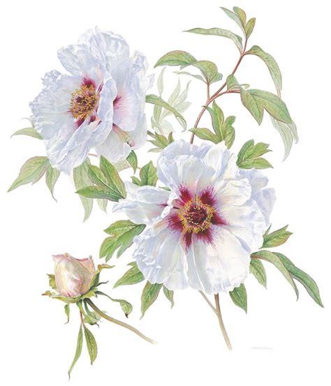 libro botanical illustration for beginners botanical art beginners workshop at the royal botanic gardens melbourne