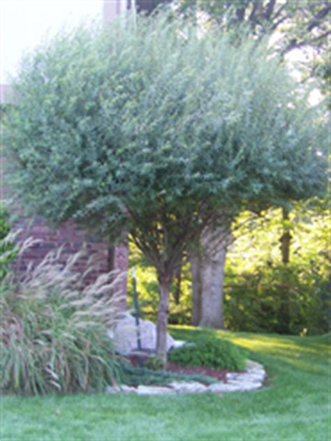 Stone Area Rug Shop Your Landscape Greenwood In Landscape Design