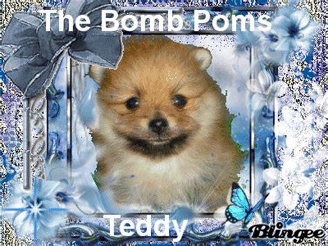 4 week pomeranian puppies 5 week pomeranian puppy picture 87422149 blingee