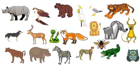 imagenes de animales salvajes los sonidos de los animales salvajes animados youtube