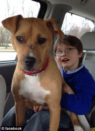 xena the warrior puppy of the year rescue puppy xena wins award for helping painfully autistic child