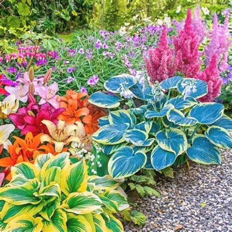colorful shade plants photo gallery of summer shade perennial flowers viewing
