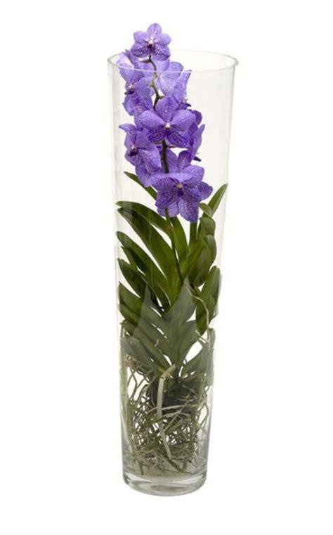 orchidee vaso comment s occuper d orchid 233 e l atelier des fleurs
