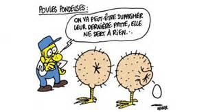 superior Les Meilleures Poules Pondeuses #2: charlie_hebdo_les_meilleures_caricatures_vertes_de_lhebdomadaire_1000_2.jpg?itok=QycBI5-M