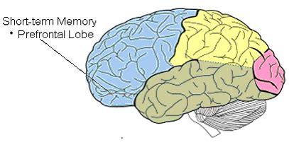 brain behavior optimization center memory