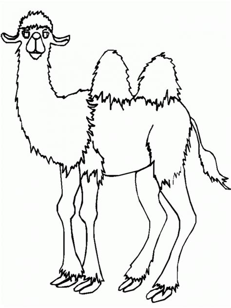 2185 cool camel animal coloring page for kids free 279990