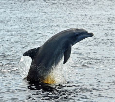 cape coral boat tours ft myers cape coral ecological dolphin boat tours