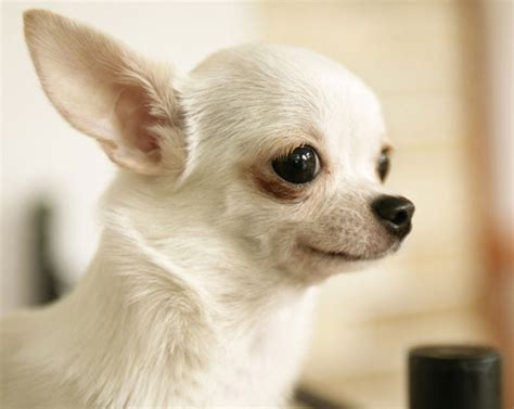top ten cutest puppies top 10 cutest breeds of dogs the cozy pet