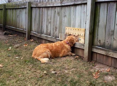 dog friendly backyard tywkiwdbi quot tai wiki widbee quot dog friendly fence