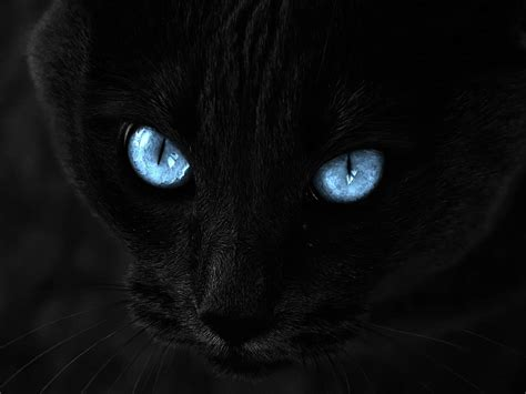 black kitten wallpaper wallpapers black cat blue eyes