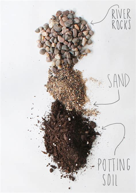 Soil Mix For Outdoor In Ground Succulents - best 25 succulent soil ideas on potting