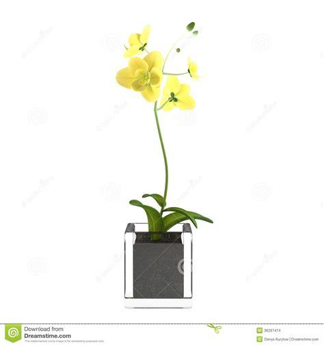 fiori nel vaso fiore giallo dell orchidea nel vaso immagini stock
