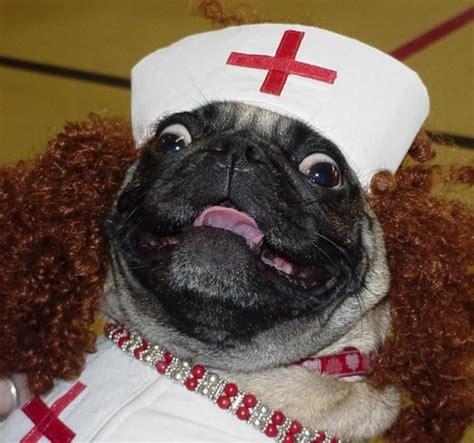 dr who pug doctor pug will see you now hug a pug