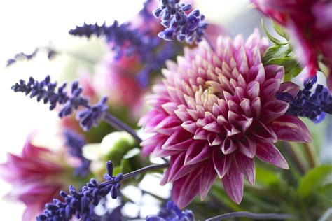 Fresh Flower by Fresh Cut Flower Tips How To Make Fresh Flowers Last