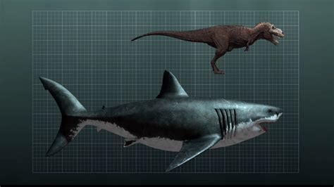 megalodon shark size megalodon blue whale size comparison quotes