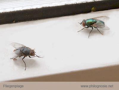 Fliegenplage Fliegen Aus Dem Haus Vertreiben Philognosie