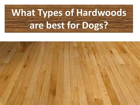 Best Type Of Flooring Best Hardwood Flooring For Dogs Advice And House
