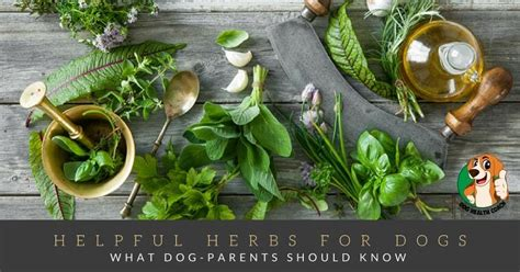 is rosemary safe for dogs herbs for dogs benefits and risks what parents should