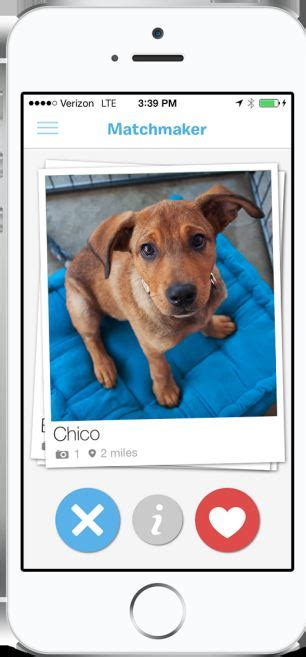 for dogs app barkbuddy an app like tinder swipe for dogs match up