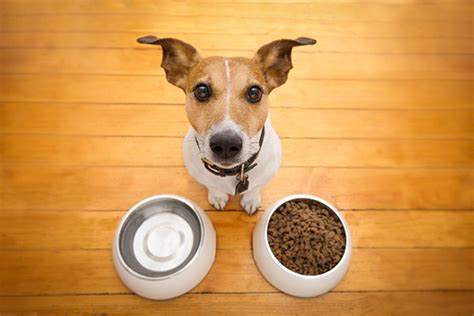 how many times should you feed a puppy food dogster