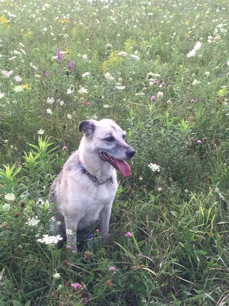 quercetin for dogs ottawa valley whisperer quercetin alternative medicine for dogs and cats