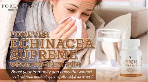 forever echinacea supreme forever echinacea supreme forever living