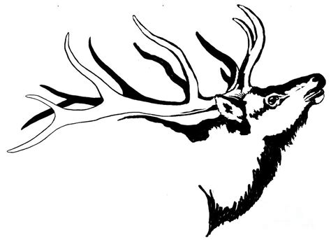 tribal elk tattoos tribal elk related keywords suggestions tribal elk