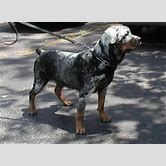 the-mask-dog-breed