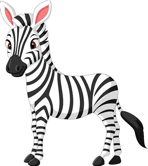 clipart zebra royalty free zebra clip art vector images illustrations
