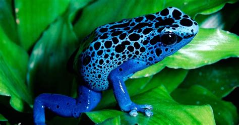 colored definition wallpapers box colored frog high definition wallpapers