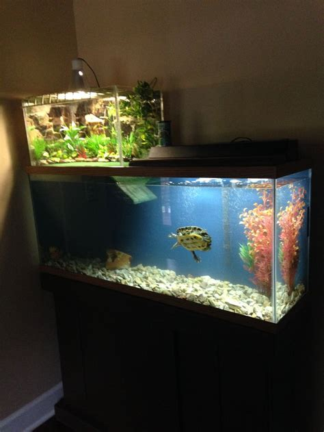 the 25 best ideas about turtle aquarium on