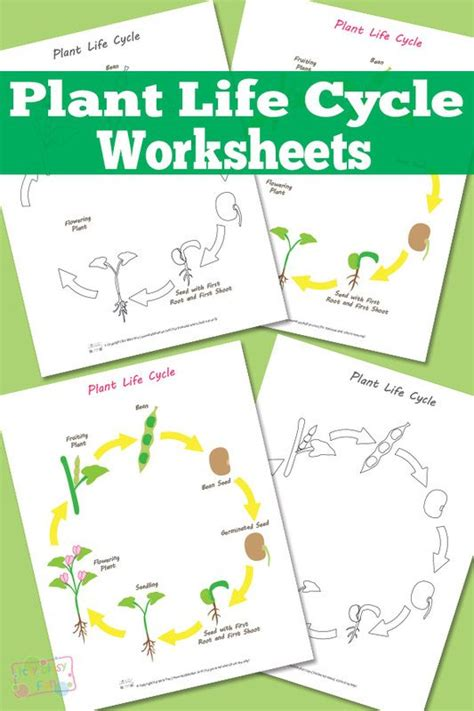 free printable animal life cycle worksheets plant life cycle worksheet