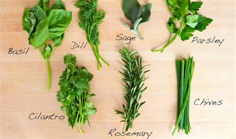 what is a good rosemary substitute fantastic options for every recipe oct 2017 when sophia