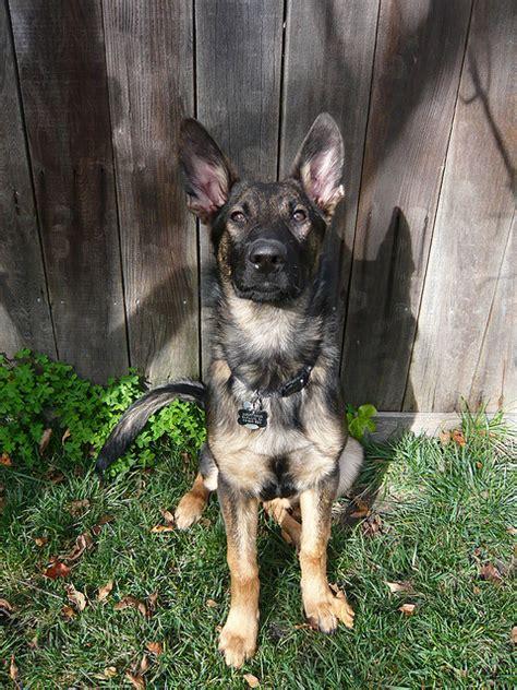watchdog vs guard think you want a guard