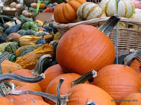 gumbo s pic of the day october 31 2015 the pumpkin gumbo s pic of the day oct 31 2013 byward market