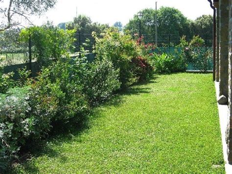 siepi giardino sempreverdi siepi miste siepi siepi con piante diverse