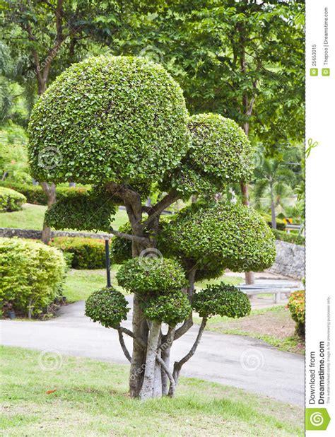 Sch 246 Ner Zwergartiger Baum Im Garten Lizenzfreies