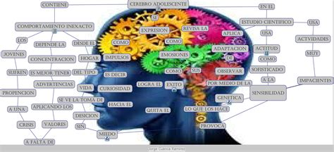 cerebro adolescente ihmc public cmaps 3