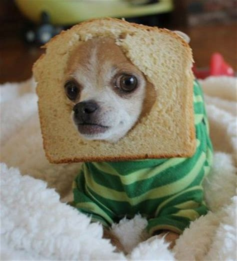 bread puppies just a sportin a of bread doesn t your d puppies galore juxtapost
