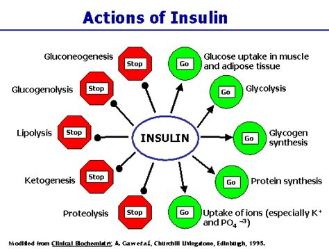 Teh Insulin s page 3 my theory for the cause of adhd